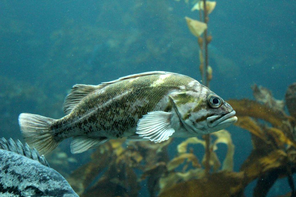 Arizona09 for Gros poisson aquarium