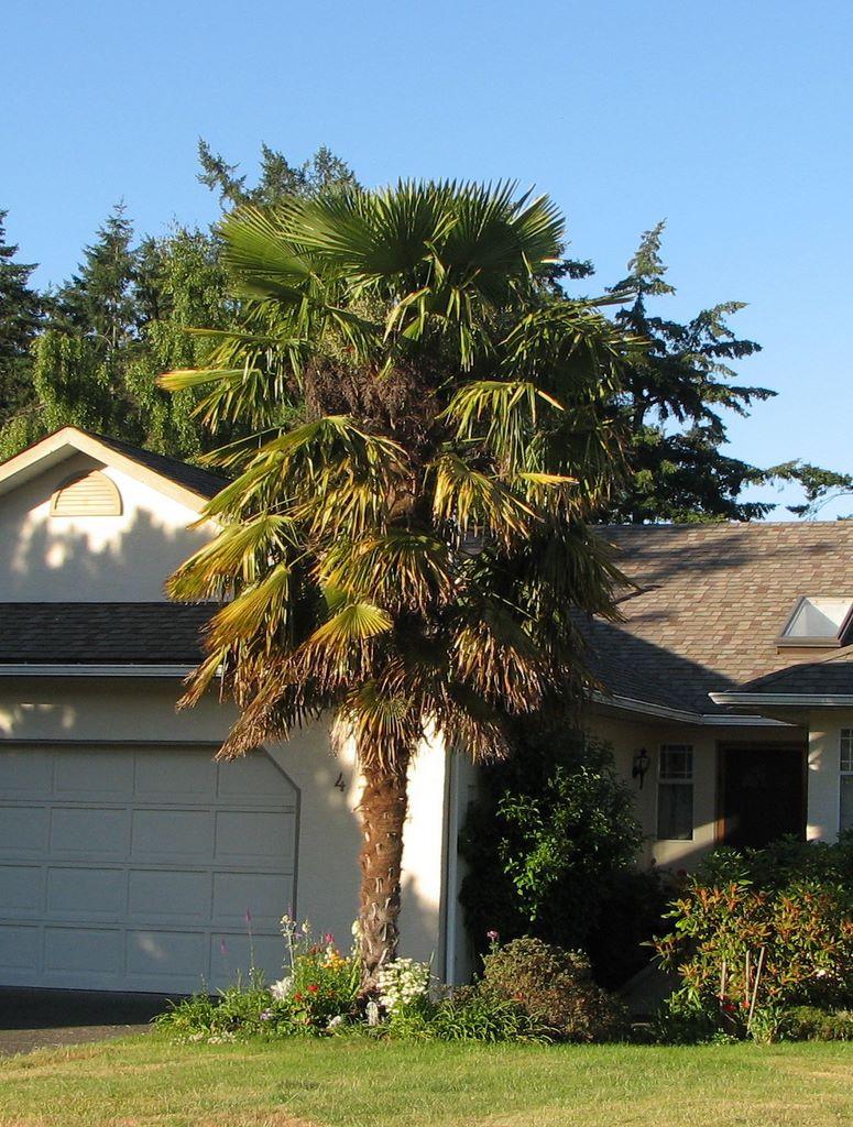 Maison de victoria - Sortes de palmiers ...